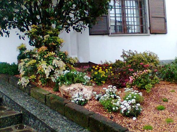 Produzione vendita e piantumazione di piante ornamentali for Piante da aiuola perenni