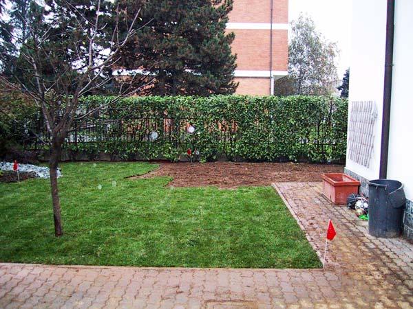 Produzione vendita e piantumazione di piante ornamentali for Prato zolle