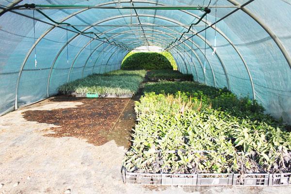 Produzione vendita e piantumazione di piante ornamentali for Piante tappezzanti da ombra
